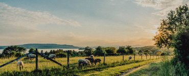 Bodensee-Idylle - Image by Hermann Schmider from Pixabay
