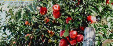 SichtWeisen | Regionale Ernährung am Bodensee | Bild von Constanze Beyer auf Pixabay
